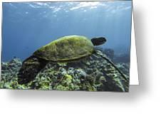 Cruising The Reef Greeting Card by Brad Scott