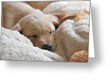 Cuddling Labrador Retriever Puppy Greeting Card by Jennie Marie Schell