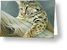 Curiosity - Young Bobcat Greeting Card by Paul Krapf