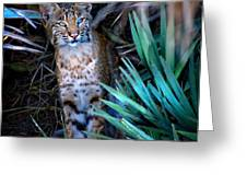 Curious Bobcat Greeting Card by Mark Andrew Thomas