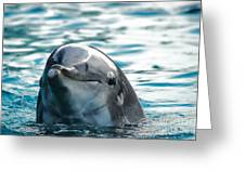 Curious Dolphin Greeting Card by Mariola Bitner