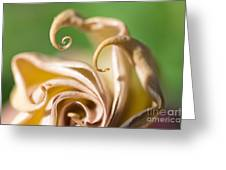 Curled Petals Greeting Card by Terry Rowe