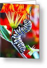 Curly Caterpiller Greeting Card by Betsy Straley