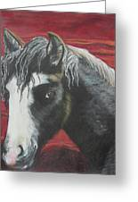 Curly - The Nokota Mustang Greeting Card by Jeanne Fischer