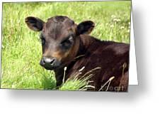 Cute Cow Greeting Card by Terri  Waters