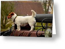 Cute Dog On Carriage Seat Greeting Card by Imran Ahmed