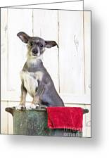 Cute Dog Washtub Greeting Card by Edward Fielding