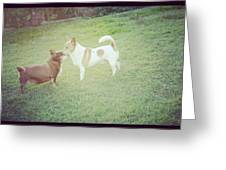 Cute Dogs Greeting Card by Victoria Roehrig