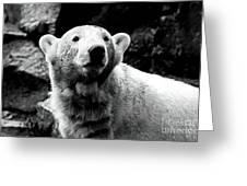 Cute Knut Greeting Card by John Rizzuto
