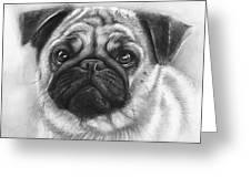 Cute Pug Greeting Card by Olga Shvartsur