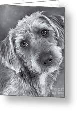 Cute Pup In Black And White Greeting Card by Natalie Kinnear