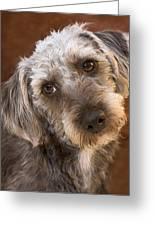 Cute Pup Greeting Card by Natalie Kinnear
