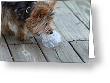 Cutest Dog Ever - Animal - 011315 Greeting Card by DC Photographer