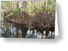 Cypress Swamp Greeting Card by Peg Urban