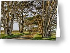 Cypress Tunnel Greeting Card by Robert Rus
