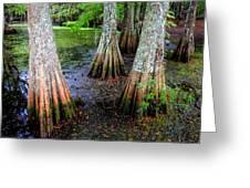 Cypress Waltz Greeting Card by Karen Wiles