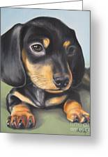 Dachshund Puppy Greeting Card by Jindra Noewi