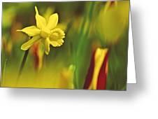 Daffodil Greeting Card by Heiko Koehrer-Wagner