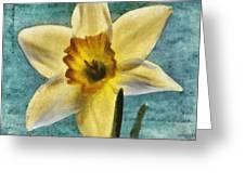 Daffodil Greeting Card by Jeff Kolker