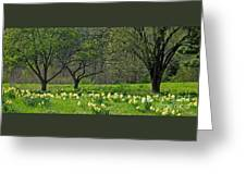 Daffodil Meadow Greeting Card by Ann Horn