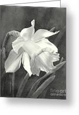 Daffodil Greeting Card by Nicola Butt
