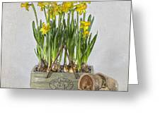 Daffodils Greeting Card by Jacky Parker