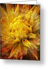 Dahlia Abstract Greeting Card by Garry Gay