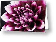 Dahlia Delightful Greeting Card by Kathi Mirto