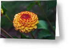 Dahlia Greeting Card by Jeff  Swan