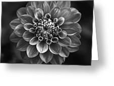 Dahlia Greeting Card by Marc Huebner
