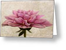 Dahlietta Amy Textured Greeting Card by John Edwards