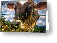 Dairy Cow Greeting Card by Bob Orsillo