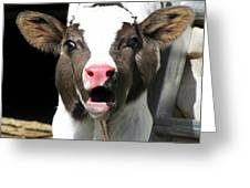 Dairy Cow Greeting Card by Christina Rollo