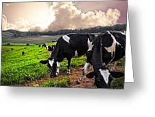 Dairy Cows At Sunset Greeting Card by Debra and Dave Vanderlaan