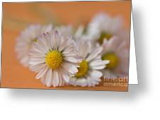 Daisies On Orange Greeting Card by Jan Bickerton