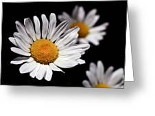 Daisies Greeting Card by Rona Black