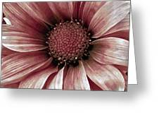 Daisy Daisy Blush Pink Greeting Card by Angelina Vick