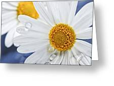 Daisy flowers with water drops Greeting Card by Elena Elisseeva