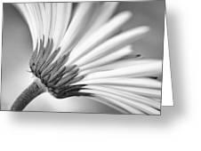 Daisy Noir Greeting Card by Christi Kraft