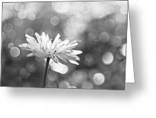 Daisy Rain Greeting Card by Theresa Tahara