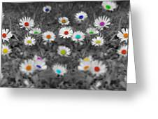 Daisy Rainbow Greeting Card by Mark Rogan
