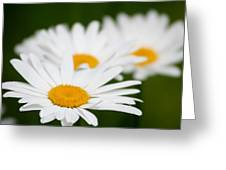 Daisy Train Greeting Card by Barbara S Nickerson