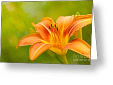 Da'lightful Greeting Card by Reflective Moment Photography And Digital Art Images