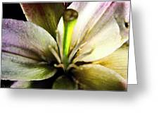 Damaged Lily  Greeting Card by Danielle  Parent