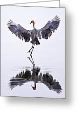 Dancing On Water Greeting Card by Robert Jensen