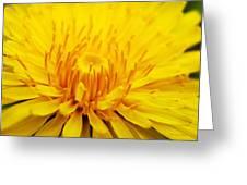 Dandelion Greeting Card by Christina Rollo