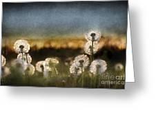 Dandelion Dusk Greeting Card by Cindy Singleton