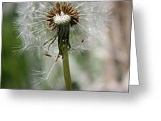 Dandelion Greeting Card by Maria Schaefers