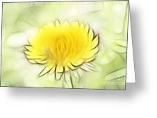 Dandelion Greeting Card by Michal Boubin