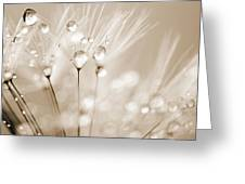 Dandelion Seed With Water Droplets In Sepia Greeting Card by Natalie Kinnear